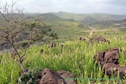 Djibouti1