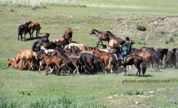 mongoliafotog13