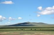 mongoliafotog17