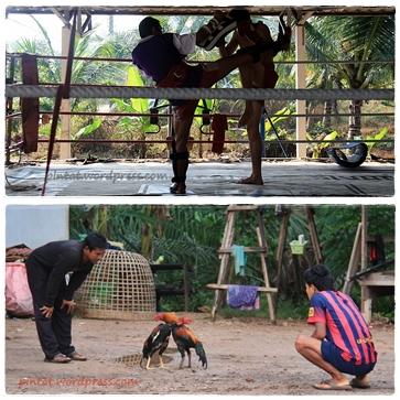 thailandia2013m2