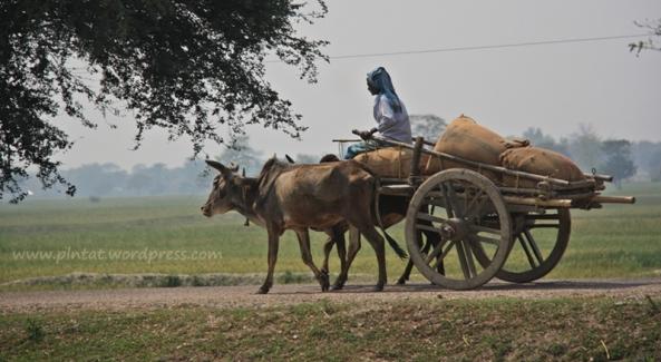 nepal ritmo animal